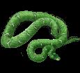 Boa Constrictor adulto - piel 5