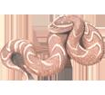 Víbora bufadora bebé - piel 52
