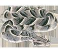 Víbora bufadora adulto - piel 52