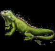 Iguana adulto - piel 72