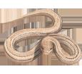 Víbora áspic - piel 52